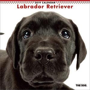 2019年度版 THE DOG カレンダー ラブラドール・レトリーバー|aquabase