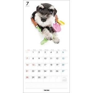 2019年度版 THE DOG カレンダー ミニチュア・シュナウザー|aquabase|03