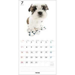2019年度版 THE DOG カレンダー シー・ズー|aquabase|03
