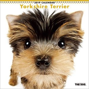 2019年度版 THE DOG カレンダー ヨークシャー・テリア|aquabase