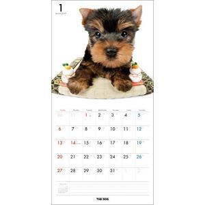 2019年度版 THE DOG カレンダー ヨークシャー・テリア|aquabase|02