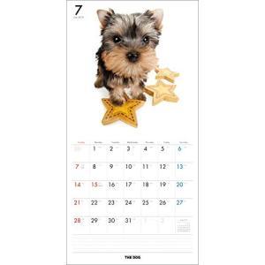 2019年度版 THE DOG カレンダー ヨークシャー・テリア|aquabase|03