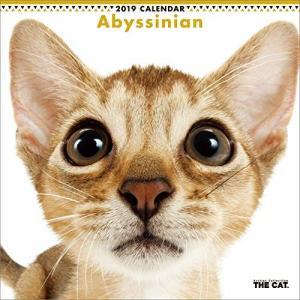 2019年度版 THE CAT カレンダー アビシニアン|aquabase
