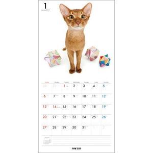 2019年度版 THE CAT カレンダー アビシニアン|aquabase|02