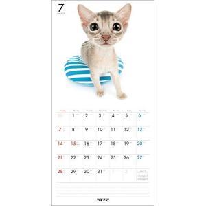 2019年度版 THE CAT カレンダー アビシニアン|aquabase|03