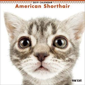 2019年度版 THE CAT カレンダー アメリカン・ショートヘア|aquabase