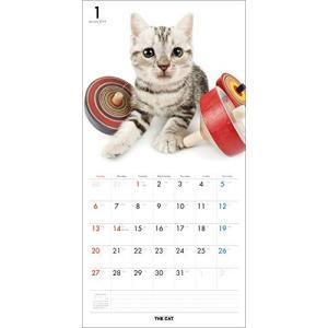 2019年度版 THE CAT カレンダー アメリカン・ショートヘア|aquabase|02