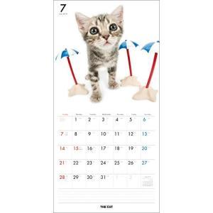 2019年度版 THE CAT カレンダー アメリカン・ショートヘア|aquabase|03