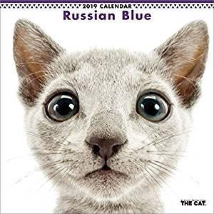 2019年度版 THE CAT カレンダー ロシアン・ブルー aquabase