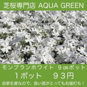 モンブランホワイト 芝桜(シバザクラ)