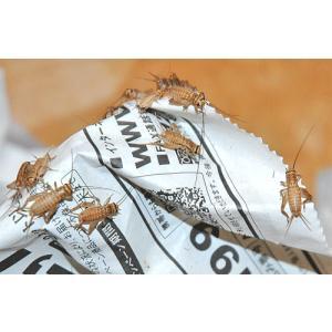 サイズ:1匹 約5〜10mm  もっともポピュラーな餌用昆虫で栄養満点!! 中小型トカゲ・ヤモリ・カ...