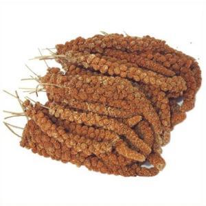オリジナル 赤粟の穂 500g|aquapet