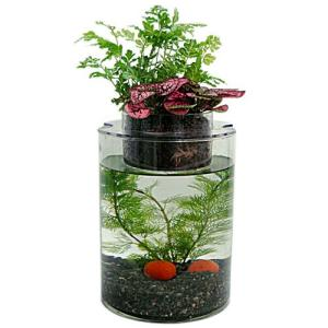 グラスガーデンP150+観葉植物2個+白メダカ3匹セット|aquapet
