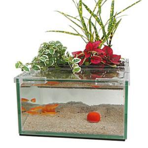 グラスガーデンN190+観葉植物3個+白メダカ3匹セット|aquapet