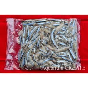 細切れ 真空パック冷凍キビナゴ [3kg]|aquashop-create|02