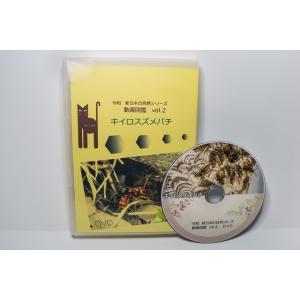 動画図鑑キイロスズメバチ DVD版|aquashopp21
