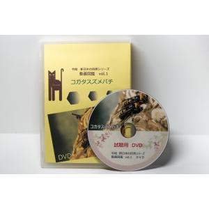 動画図鑑コガタスズメバチ DVD版|aquashopp21