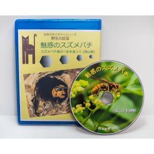 魅惑のスズメバチ 95分ブルーレイ版|aquashopp21