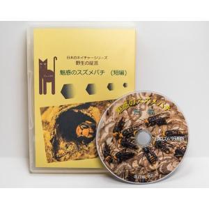 魅惑のスズメバチ再編 58分短編DVD|aquashopp21