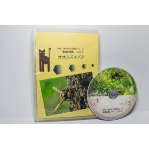 動画図鑑オオスズメバチ DVD版|aquashopp21