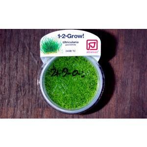 トロピカ社 1・2・Grow! ウォーターローン 1CUP|aquatailors