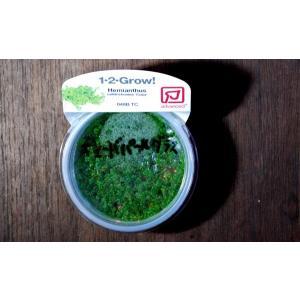 トロピカ社 1・2・Grow! キューバパールグラス 1CUP|aquatailors