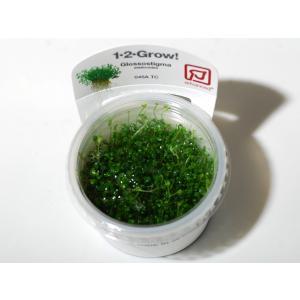 トロピカ社 1・2・Grow! グロッソスティグマ 1CUP|aquatailors