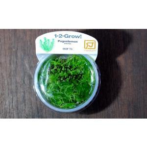トロピカ社 1・2・Grow! ポゴステモン エレクタス 1CUP|aquatailors