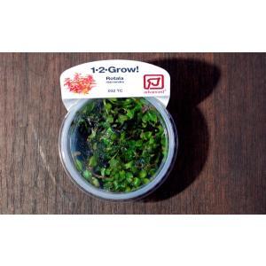 トロピカ社 1・2・Grow! ロタラ マクランドラ 1CUP|aquatailors