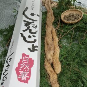 自然薯 じねんじょ 静岡県産 高級自然薯セット 約800g