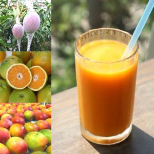 【冷凍便】和歌山産「トロピカルスムージー」農家さんから直接分けてもらうくだもの(和歌山産完熟マンゴー+夏のオレンジ)+バナナ arancia-mm