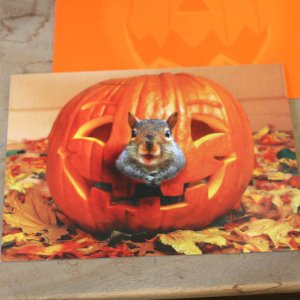 ハロウィーンカード「リス from パンプキンノーズ」Halloween Card from U.S.A.【メール便可】 arancia-mm