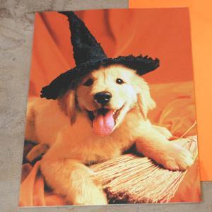ハロウィーンカード「魔女のレトリバー」Halloween Card from U.S.A.【メール便可】 arancia-mm