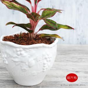 アヒージョ鍋 キャセロール鍋 直径17cm(浅皿取っ手付) カスエラ 耐熱陶器 スペイン製土鍋  直火 オーブン可 アヒージョ皿|area27
