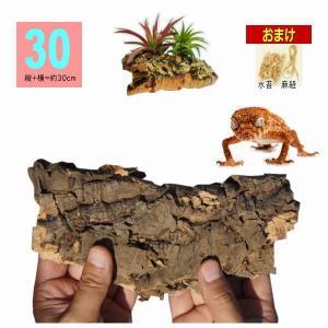*30サイズ:縦+横=約30cm  *天然コルク樫樹皮  ■おまけとして「エアプランツの養生」体験に...
