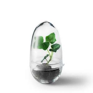Design House Stockholm(デザインハウスストックホルム) グロウ グリーンハウス クリア(Grow GREENHOUSE clear)|arenot