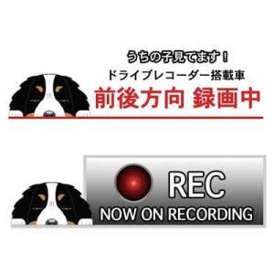 ドラREC犬ステッカー バーニーズ 犬 ステッカー シール ドライブレコーダー 録画 グッズ 迷惑防止