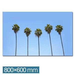 フォトパネル リゾート風 インテリア  アートパネル アートフレーム フォトアート パネル IAP51251 California Palm trees