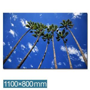 フォトパネル リゾート風 インテリア アートパネル アートフレーム フォトアート パネル フレーム IAP51317 Group of palms