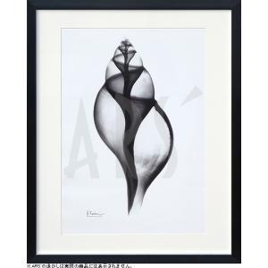 レントゲン写真の壁掛け アートパネル レントゲンアート アルバート・クーツィール Tulip Shell