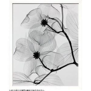 花々をレントゲン写真で撮るという斬新な手法で表現したレントゲンアート。  透明感のある葉脈が神秘的に...
