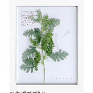 インテリアアート/リーフアートパネル ハーブフレーム シロタエギク(タペストリー/ウォールアート/絵画 インテリア/北欧)|arsonline