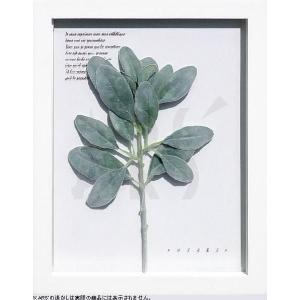 インテリアアート/リーフアートパネル ハーブフレーム ラムズイヤー(タペストリー/ウォールアート/絵画 インテリア/北欧)|arsonline