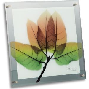 レントゲンアートX Ray ガラスアート・アスペンフォール(壁掛用)(Lサイズ) art1