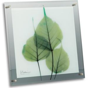 レントゲンアートX Ray ガラスアート・グリーンユーカリ(壁掛用)(Lサイズ) art1