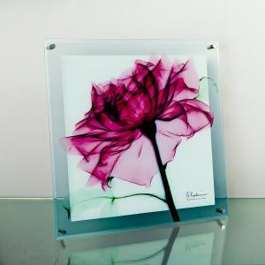 レントゲンアートX Ray ガラスアート・ティールローズ(壁掛用)(Lサイズ) art1