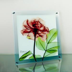 レントゲンアートX Ray ガラスアート・ローズ(壁掛用)(Lサイズ) art1