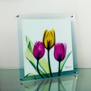 レントゲンアートX Ray ガラスアート・チューリップ(壁掛用)(Lサイズ) art1
