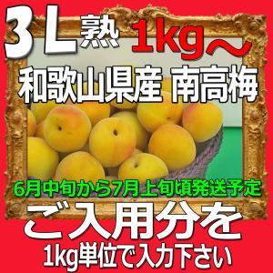 生梅南高梅秀品3L-ほしいだけ1kgから、梅干・梅酒・他、有機肥料使用/紀州和歌山県産青梅