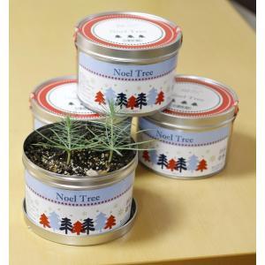 クリスマスツリー 栽培セット NoelTree  ノエルツリー  種、種子  栽培キット 種、種子栽培キット クリスマスツリー ノエル